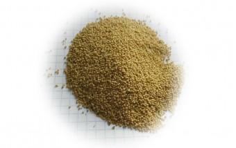 Семена амаранта для посадки